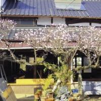 梅の花の香り漂う解体現場