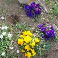 庭の花と、日記について