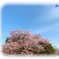 春めいた陽気に色々な発見も
