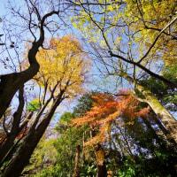 晩秋の赤塚植物園 2016