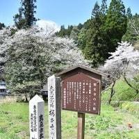 桜本寺の大桜