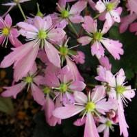 2007-10-21花の美術館02