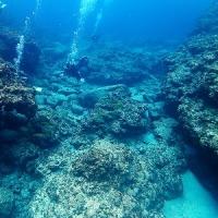 アカウミガメ!沖縄ダイビング 那覇シーマリン