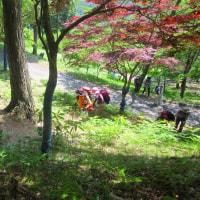 14 神ノ倉山(561m:安佐北区)登山  もみじ谷を