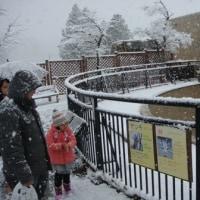 雪の旭山動物園