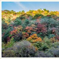裏耶馬渓 ~鶴ヶ原の景~