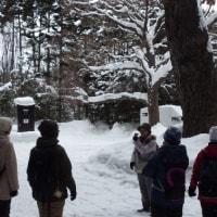 1月18日(水)はじめての自然散歩~円山公園の様子