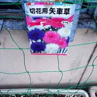 三種類花日記 1