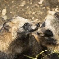 久しぶりの東山動物園