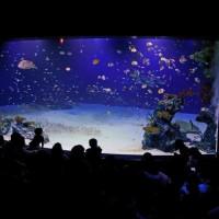 マリホ水族館 『餌やりショー』 動画