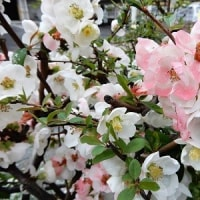 私の木の花コレクション