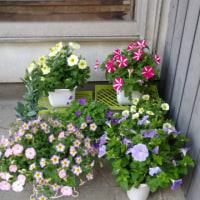 今日の庭仕事( *^艸^)