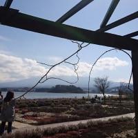 河口湖にも春の訪れ そしてポケモンgo_本日の装備