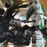 自然史博物館にて