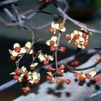 春の香りを嗅ごうと… 玄関を開けて大きく深呼吸、春の匂いがプンプン…