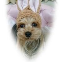 ♪メルキャンのねこウサギ♪