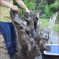 多肉と流木