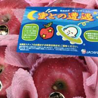 これはフジリンゴです(^^)/
