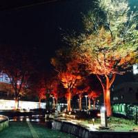 鳥取駅前のライトアップ☆