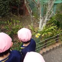 ぴんく 2歳児 散歩☆
