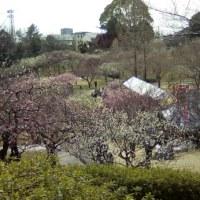 梅坪の平芝梅林公園