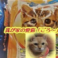 今日は猫の日だ・・・