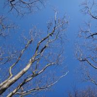 起きたら空が青かったので。