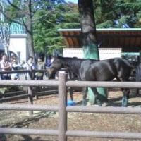 今日は久々に競馬場へ行ってきました。天皇賞(秋)です。