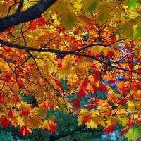 話題が無いので紅葉と黄葉の写真です