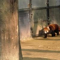 初動物園。