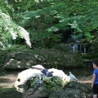 ¢ 色がちょっとカラフルなヤマガラの姿、ドキドキ眺め ¢ G公園(岐阜県岐阜市)
