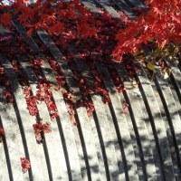 天朝山公園の紅葉 2016-10
