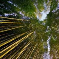 超広角レンズ10ミリで撮った夕暮れの竹の子公園