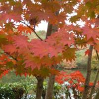 花フェスタ記念公園の紅葉