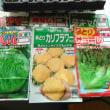 秋野菜準備