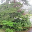偏り極端な天候が多い昨今!・・・ブログ更新しました!