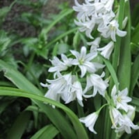白い花に グリーンが爽やか~