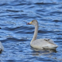 白鳥の小川 その2