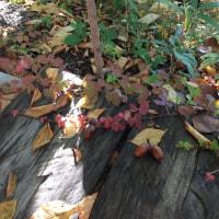 北信濃の秋は、短くも。