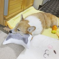 猫枕LOVE