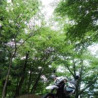 新緑の林道!