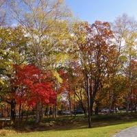 葉が落ち始めました Fallen leaves