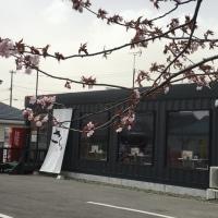 桜を見ながら さくらへ