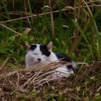 最近であった猫たち MC5236-6111 b
