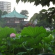 上野で三志会ランチ