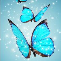 生れ変わりの蝶