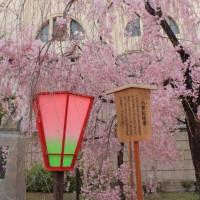 大阪造幣局桜の通り抜け2017画像 その9