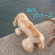 海だぁーっ!!