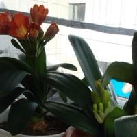 花芽のふたりごと
