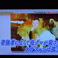 3/26 熊のステファン 何度見ても可愛い シムラ動物園